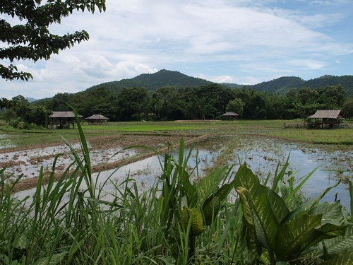 Village area outside Chiang mai