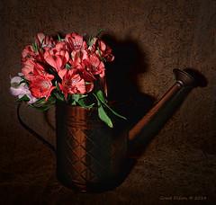 Astromelia in Copper (Grace Pedulla Dillon) Tags: flowers summer stilllife garden bouquet botanics astromelia