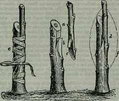 """Image from page 787 of """"The encyclopædia britannica; a dictionary of arts, sciences, literature and general information"""" (1910)"""