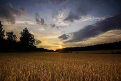 Bjurs, Kungsängen, Upplands-Bro, Sweden. (Marc Arnoud Rogier van der Wiel) Tags: lee filters kungsängen upplandsbro sweden sunset sky landscape nature cloudy httpsrbphotographiccouk field outdoor cloud serene sverige