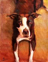 Mr-Bingley (ChristopherClarkArt) Tags: christopher clark fine art artist paint original oil painting daily painter impressionist impressionism dog portrait pitbull dogpainting animal commission