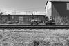 chasing (nocklebeast) Tags: ca santacruz train tracks minitrain nrd scphoto santacruzbigtrees followingl1043720