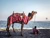 DSCF3419_2 (pavandlpk5) Tags: show sunset man beach sand camel vizag visakhapatnam visakha