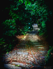 Chemin des poètes (Philippe Demasy) Tags: nikon belgium nikkor lightroom 1870 montsaintaubert afsdxzoomnikkor1870mmf3545gifed nikond7100 chemindespoètes philippedemasy