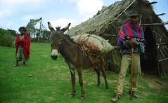 Loaded (David Abresparr) Tags: donkey ethiopia mule ambo sna etiopien wonchi mulsna