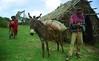 Loaded (David Abresparr) Tags: donkey ethiopia mule ambo åsna etiopien wonchi mulåsna