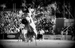 1727 Emergencias Casmu (Eduardo Amorim) Tags: horses horse southamerica caballo uruguay cheval caballos cavalos prado montevideo pferde cavalli cavallo cavalo gauchos pferd hest hevonen chevaux gaucho 馬 américadosul montevidéu häst uruguai gaúcho 말 amériquedusud лошадь gaúchos 马 sudamérica suramérica américadelsur סוס südamerika jineteada حصان άλογο americadelsud gineteada ม้า americameridionale semanacriolla semanacriolladelprado eduardoamorim ঘোড়া