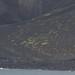 Surtsey vegetation 2014