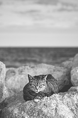 staring contest (thombe77) Tags: ocean bw white black stone cat canon eos 50mm see meer stones steine 7d sw katze mallorca stein schwarz weis