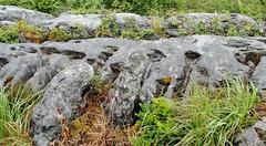 The Burren, Co Clare, Ireland (IvanWalsh.com) Tags: moss rainforest karst grykes burrenireland