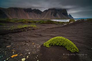 Summer beach, Iceland