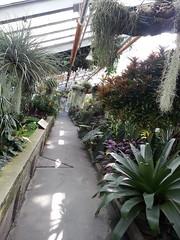 20140809_171756 (Kenzie LaMar) Tags: cactus plants plant cacti succulent montreal botanicalgardens