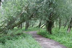 DSC06460 (Ton Smilde) Tags: oostvaardersplassen naturereserveinthenetherlands