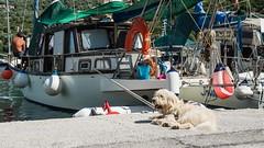Dog and his boat (Tom Ort) Tags: street dog tom lens four boat zoom harbour yacht olympus greece third czechrepublic 169 mirco sivota omd ort lefkada mft 1250mm em5 f3563 mzuiko