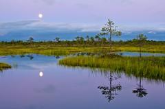 Calm and quiet (Anton Hallik) Tags: blue moon lake reflection water pine reflections river landscape estonia quiet peaceful calm moonrise bluehour bog antonhallik