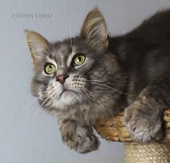 Harald (Esther Vinju Photography) Tags: pet cat photography kat kitty esther huisdier poes kater vinju esthervinju