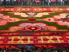 50ème anniversaire de l'immigration turque en Belgique (CORMA) Tags: belgique belgium bruxelles brussels grandplace tapisdefleurs 2014 immigrationturque begonia 2012