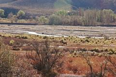 DSC_2225 Paisaje jujeo (marialuz_fernandez) Tags: mountain argentina nikon d70s montaas jujuy tilcara maimar