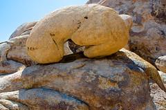 Cartoonish Rock (hecticskeptic) Tags: california whitemountains mtwhitney monolake mammothlakes lonepine bishop osprey whitneyportal schulmangrove rainbowfalls bristleconepines alabamahills devilspostpile mosquitoflats sotcherlake mobiusarch bristleconepinetrees rockcreekroad morganpass lathearch markamorgan
