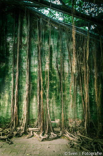 Wrapped in roots of the Banyan tree