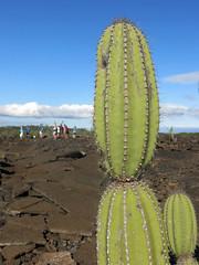 Candelabra Cactus and the group at Punta Moreno (Baractus) Tags: cactus john galapagos punta isabela oates candelabra angelito cormoran