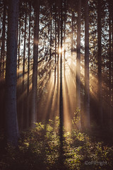 morning fog (pipflickr) Tags: wood morning autumn sunlight nature fog contrast forest bright mysterious shining sunbeam