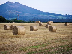 (turgidson) Tags: road ireland mountain field animal sisters studio lens four lumix three raw little zoom 5 g version harvest x stack sugar panasonic telephoto developer micro haystack threesisters pro feed hay loaf bale wicklow f28 bray haybale dmc fodder thirds vario m43 silkypix gh2 35100mm 35100 mirrorless 50450 lumixg littlesugarloaf p1280262 microfourthirds panasonicgh2 panasoniclumixdmcgh2 ballyman ballymanroad silkypixdeveloperstudiopro5 panasonic35100 panasoniclumixgxvario35100mmf28 hhs35100