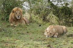 African safari, Aug 2014 - 088
