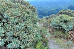 Padang Edelweiss