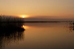 Sunrise (evisdotter) Tags: morning seascape reed nature fog sunrise reflections foggy dimma åland sooc