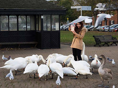 Happy Tourist feeding birds (fstop186) Tags: happy tourist girl pretty young feeding birds swans cygnets pigeons seagulls movement blur action flight frenzy fighting flying