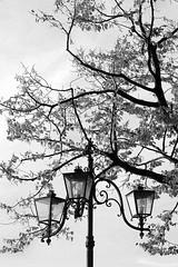 Ricami... (Annamaria Rizzi) Tags: lampioni rami albero