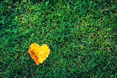 Do you lve me? (bengtson.jonas) Tags: fs161023 fotosondag 2470 canon gul grn lv grs grass tredjedelsregeln ofthirds rule leaf