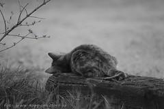 20160517094564 (koppomcolors) Tags: koppomcolors cat katt