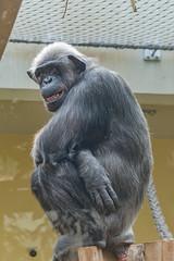 zoo heidelberg3 (micnie) Tags: heidelberg germany zoo tiere nikon d5200 vogel affe otter elefant gorilla schimpanse lwe waschbr schildkrte zebra straus papagei badenwrthenmberg