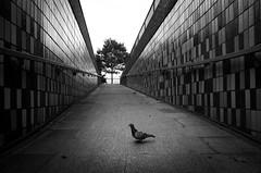 Neighbourhood Watch (Scott Baldock) Tags: street photography ricoh grii bw mono southend sea urban