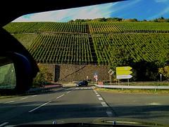 #Ahrtal (RenateEurope) Tags: ahrtal rhinelandpalatinate germany agriculture vineyards autumn 2016 yahoo:yourpictures=rinelandpalatinate yahoo:yourpictures=vineyeards