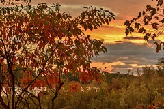 Fiery Fall (Maggggie) Tags: odc warmcolors colorful orange yellow green sky trees fall autumn leaves