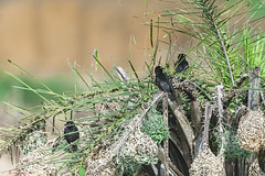 NEGRITAS (cune1) Tags: natura nature africa cameroon fiume river acqua water albero tree foresta forest animali animals uccelli birds