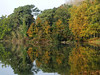 Almost autumn colour (yvonnepay615) Tags: panasonic lumix gh4 nature trees autumn reflections holkham norfolk eastanglia uk coth