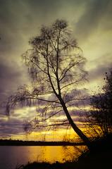 """ My favorite tree in sunset "" #Dreiländersee# (Kalbonsai) Tags: sunrice tree nikon d5100 1685mm dreiländersee germany waterscape outdoorphotography naturshot color travel water clouds dark"