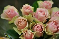 Reedesed roosid (anuwintschalek) Tags: nikond90 40mm micronikkor austria niedersterreich wienerneustadt sgis autumn home kodu aed garden garten november 2016 roosid roosa pink rosen bukett bouquet fairtrade roses
