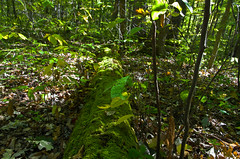 Mossy Log (ramseybuckeye) Tags: mossy log plants moss lawrence woods hardin county ohio pentax art life