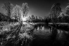 Frosty BnW (strupert) Tags: river 2470mm nikon forest woodscape cold frost sunburst monochrome blackandwhite bnw sunrise morning trondheim trndelag follsjen
