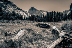 Yosemite  (T.ye) Tags: landscape mountain tree yosemite national park san francisco todd ye blackandwhite trees forest     outdoor outside