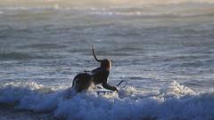 Bodyboarding at Sunset - 1 (fksr) Tags: bodyboarding boogieboarding waves surf sunset beach dillonbeach marincounty california