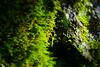 Moss (k-o-m-a-n-e-k-o) Tags: nikon d750 moss forest mountain stone rock green parasitism valley minano chichibu saitama japan 山 森 緑 苔 石 岩 渓谷 皆野 秩父 埼玉