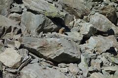 Murmeltier (Viribus Unitis 2010) Tags: tux tal hintertux valley murmeltier
