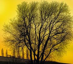 Abends am Rhein 12.2016 (KL57Foto) Tags: monheim am rhein stadt landschaft rheindamm kl57foto monheimamrhein stadtmonheim stadtmonheimamrhein germany rhineland nrw olympus pen epm2 dezember 2016 rheinland herbst autumn rhine fluss strom river abend abendstimmung
