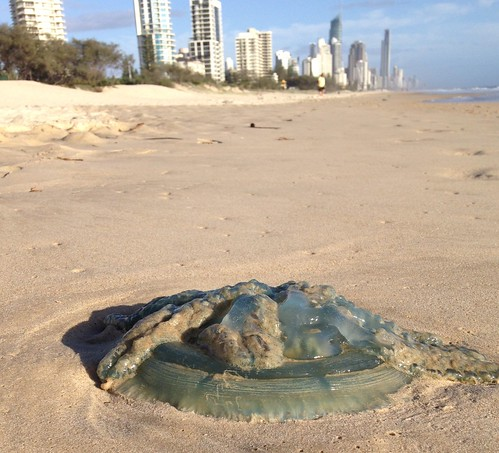 Jellyfish on Broadbeach